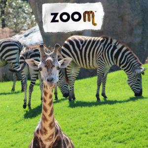 blocchi-zoom
