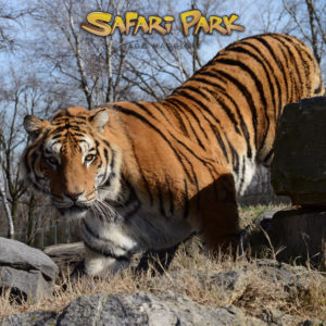 blocchi-SafariPark