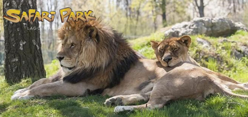 Biglietti offerta Safari Park