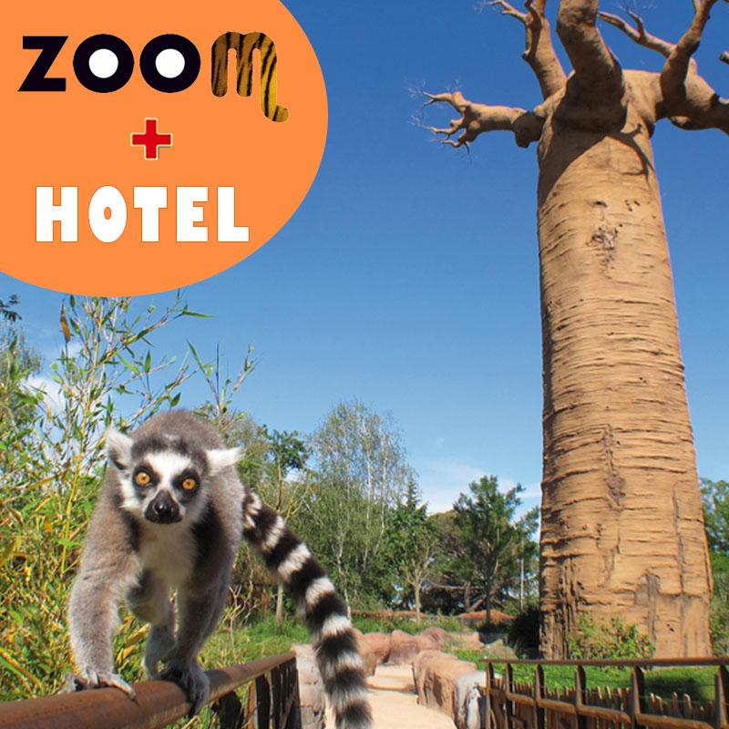 zoom torino + hotel